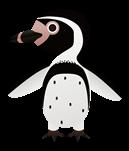 pingui, penguin, humboldt, manchot, chili, HUMBOLDT, MANCHOT, Pájaro niño, PENGUIN, Pingüino, Spheniscus humboldti, Пингвин Гумбольдта,