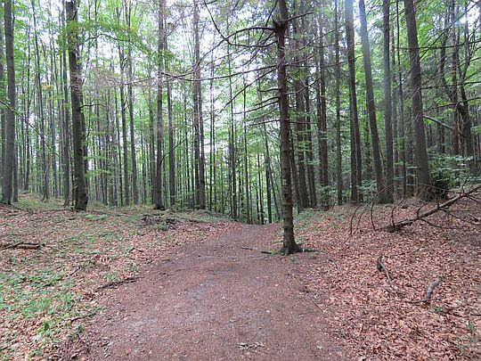 Las powyżej źródełka.