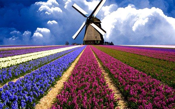 Hasil gambar untuk festival bunga tulip