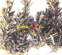 sargasum rumput laut