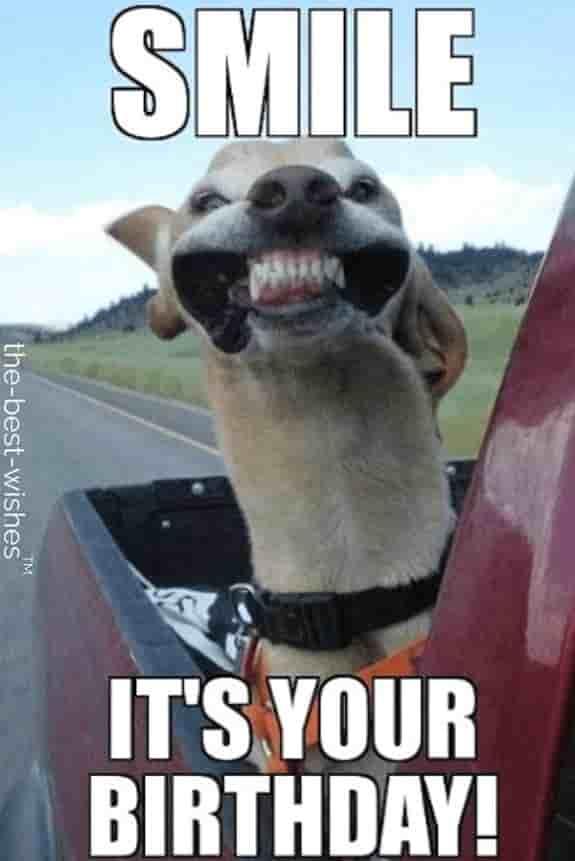Best Friend Birthday Memes : friend, birthday, memes, Funniest, Happy, Birthday, Memes, (Most, Popular)