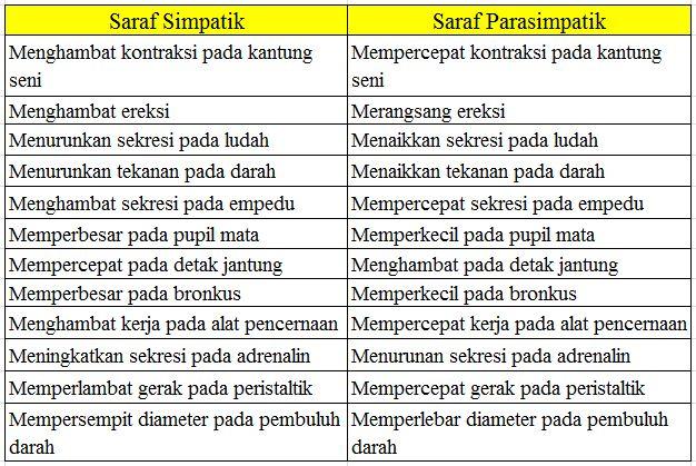 Pengertian Saraf Simpatik dan Parasimpatik Beserta Perbedaan Pengertian Saraf Simpatik dan Parasimpatik Beserta Perbedaan