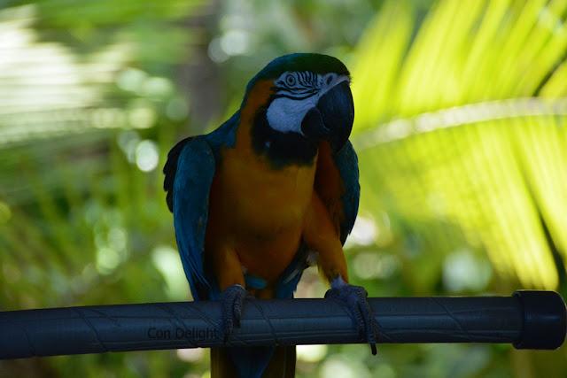 Parrot in hamat gader
