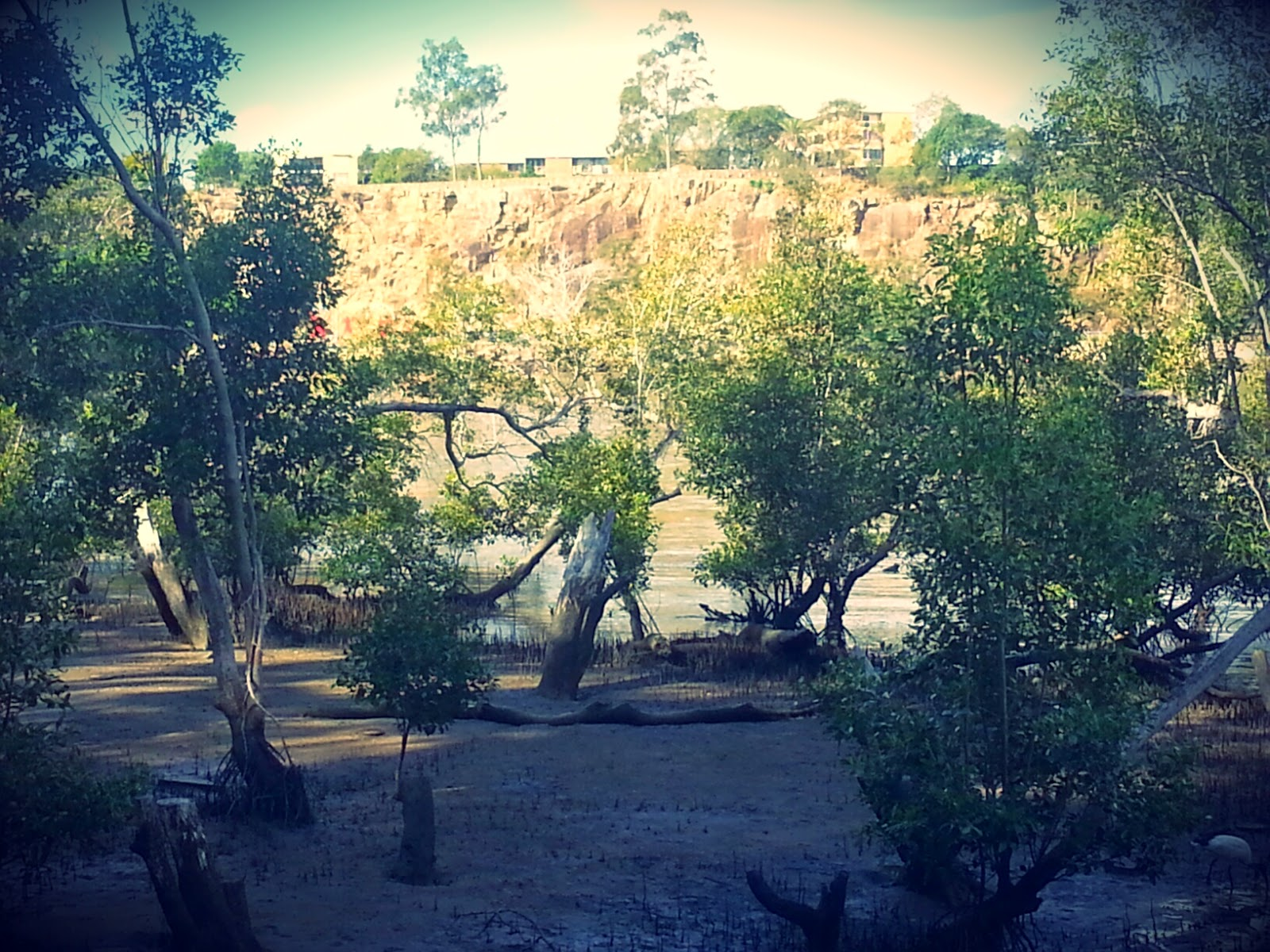 Mangroves on the Brisbane River