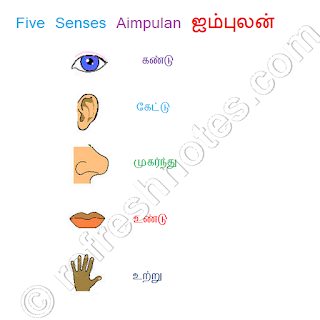 Five Senses in Tamil Aimpulan ஐம்புலன்