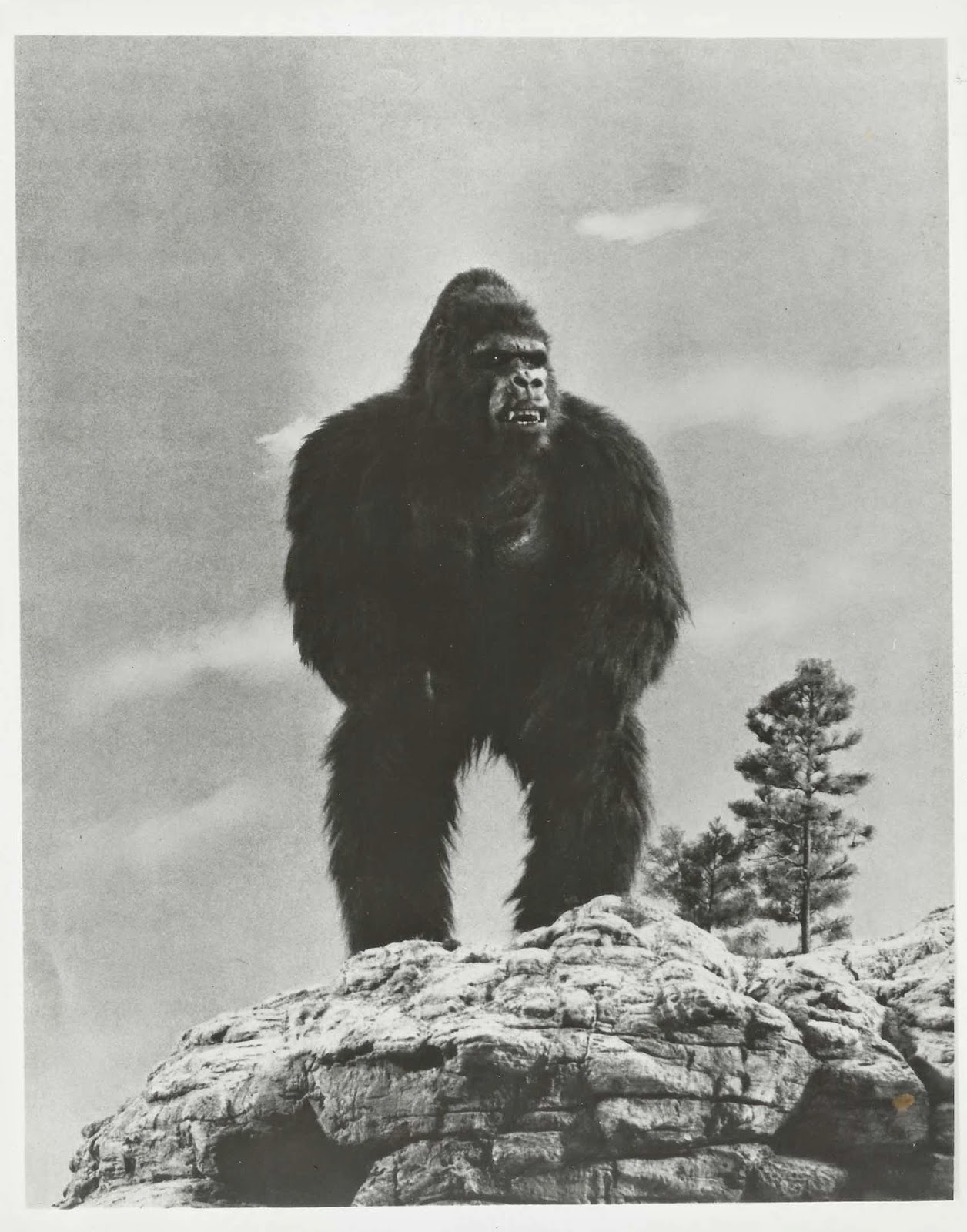 Baker's Log: A brief history of King Kong and friends