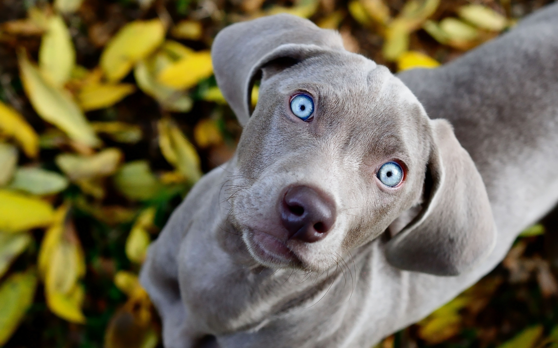https://2.bp.blogspot.com/-CN3cJtFFJX0/WYRICYAqgbI/AAAAAAAAFEs/7UKeWjhBY_IKjlXljCnxViPrd0-0bbH3gCLcBGAs/s1600/dogs-faces.jpg