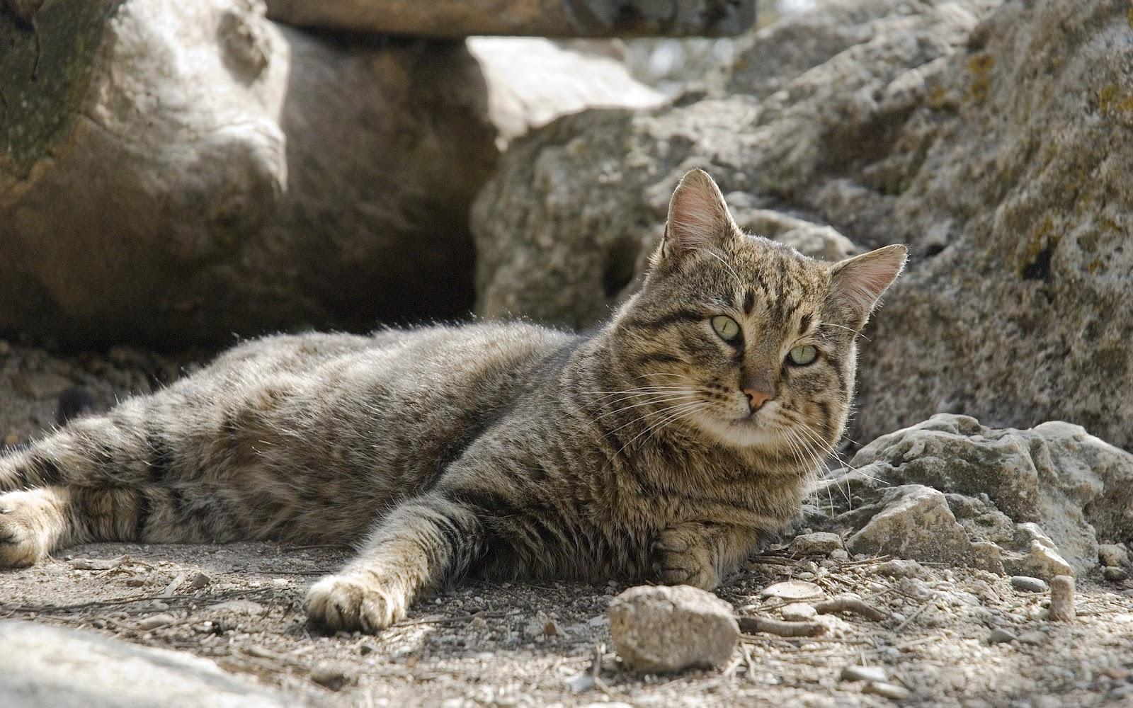 gato - photo #27
