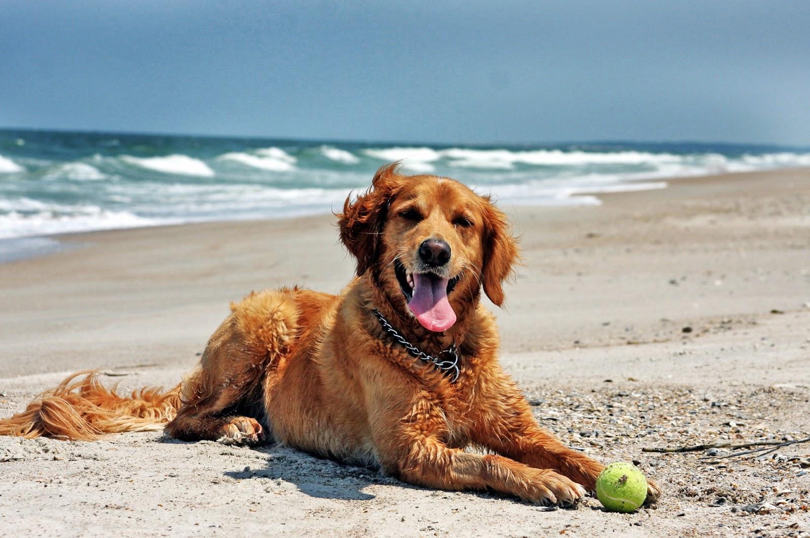 Best Dog Beaches