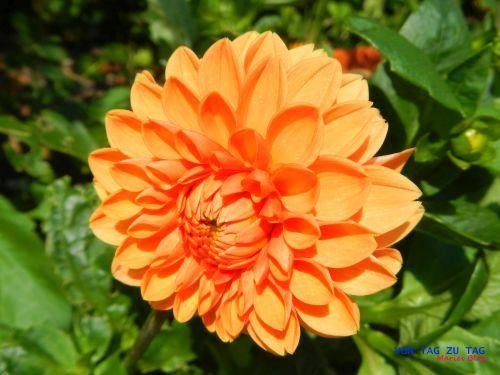http://vontagzutag-mariesblog.blogspot.co.at/p/blog-page.html
