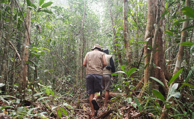 Xvlor Sebangau National Park is river system in Borneo peat swamp forests