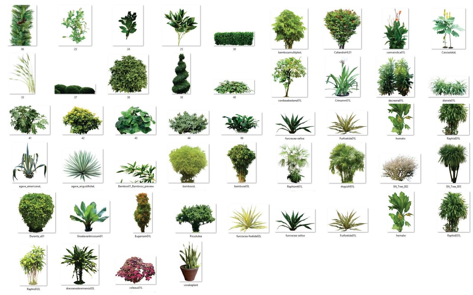 Arboles y plantas de jardin png para render photoshop for Arboles y plantas de jardin