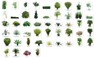 arboles y plantas png