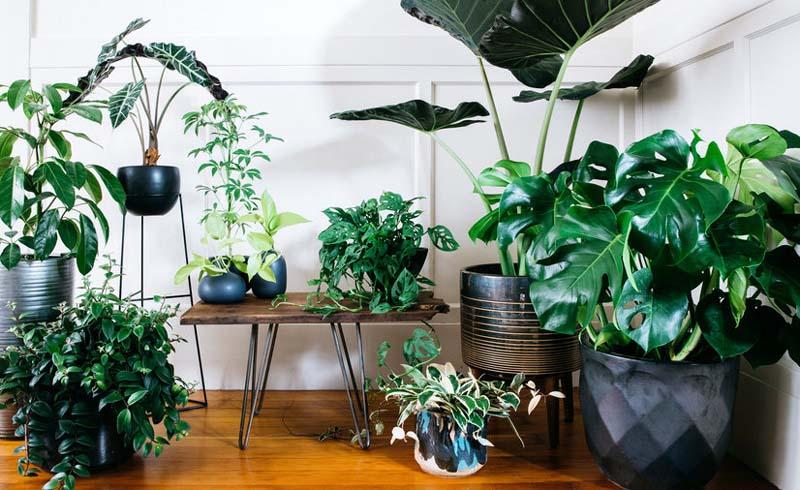 Home & Garden, Decorating & Design