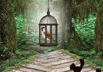 8BGames Sparrow Escape