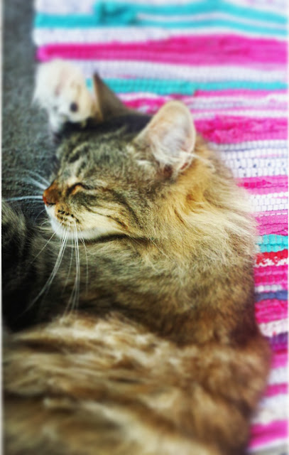 Furry Manx Rescued Cat Adopted Cat A Stylish Love Story Blog Joanna Joy