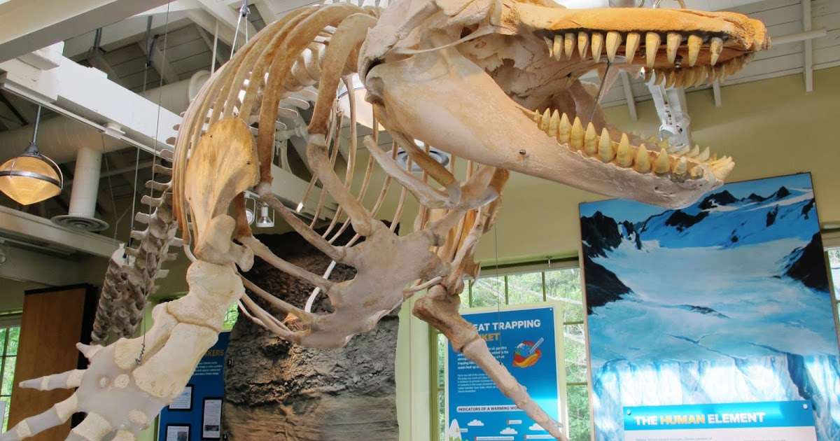 Port Townsend Marine Science Center Natural History Exhibit
