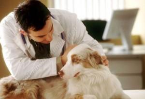 Veteriner Hekimler Nerede Çalışabilir