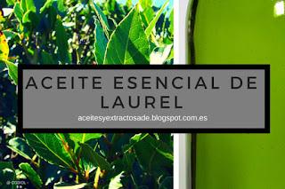 El aceite esencial de laurel uno de los más populares por sus propiedades antivirales