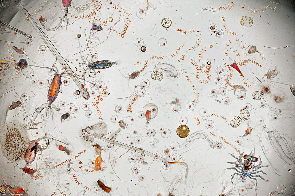 Sea Water Bacteria Microscope