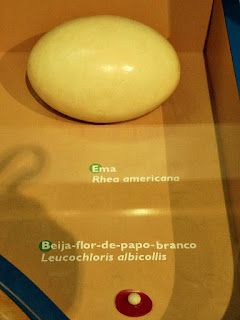 Maior e Menor Ovo (Museu de Ciência e Tecnologia da PUCRS)