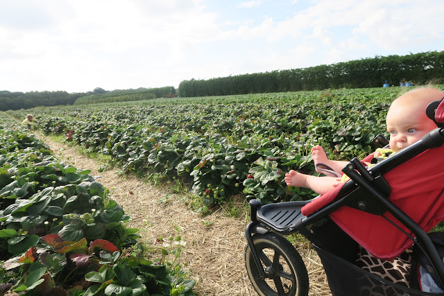 Freyja viewing the strawberry fields from Phil and Ted's pushchair