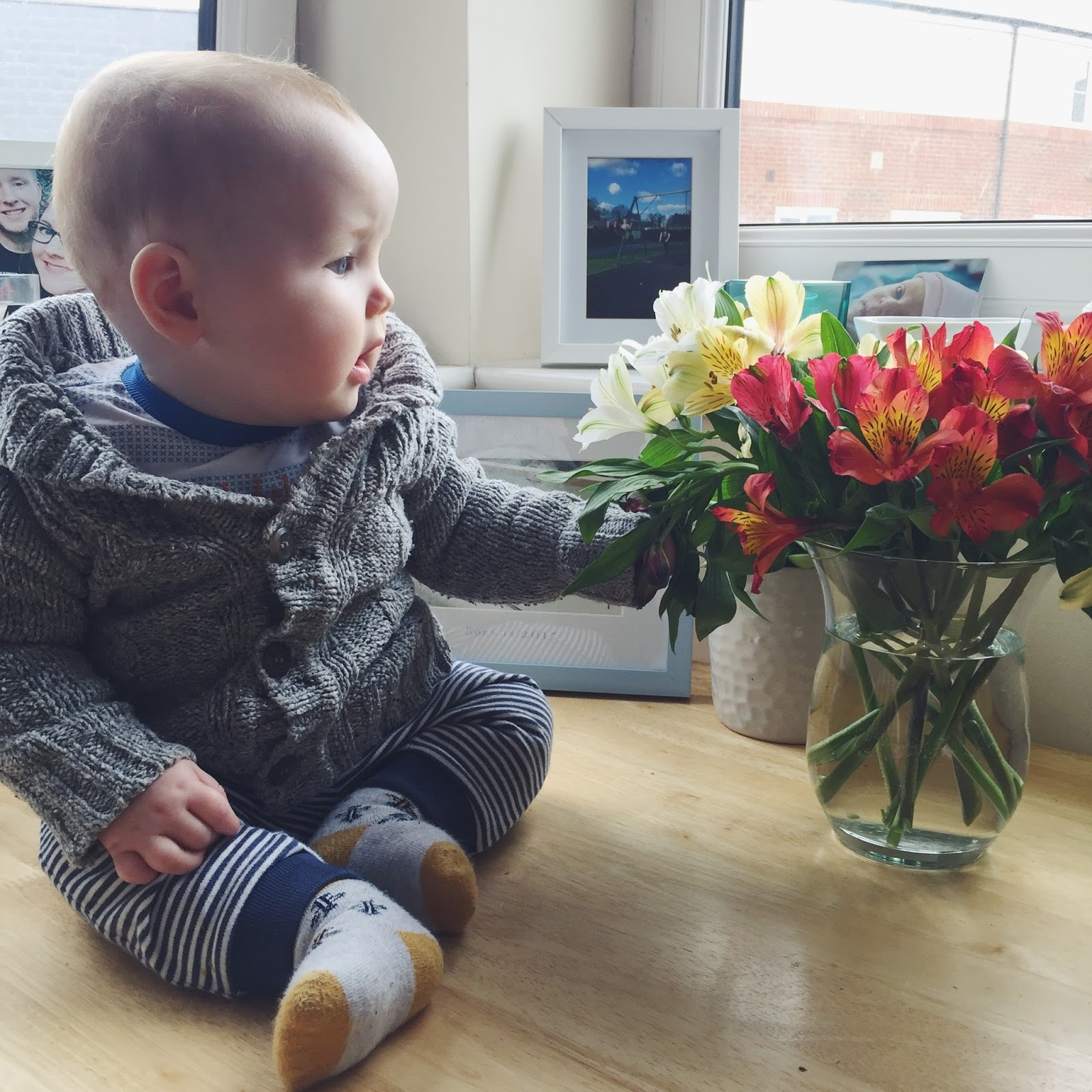 TJ is 7 months old | Love, Maisie | www.lovemaisie.com