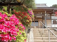 久成寺のツツジ