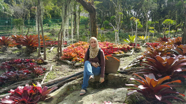 Gunung Jerai Botanical Park - largest collection and rare orchids, tourism, orchids are displayed in its natural habitat,