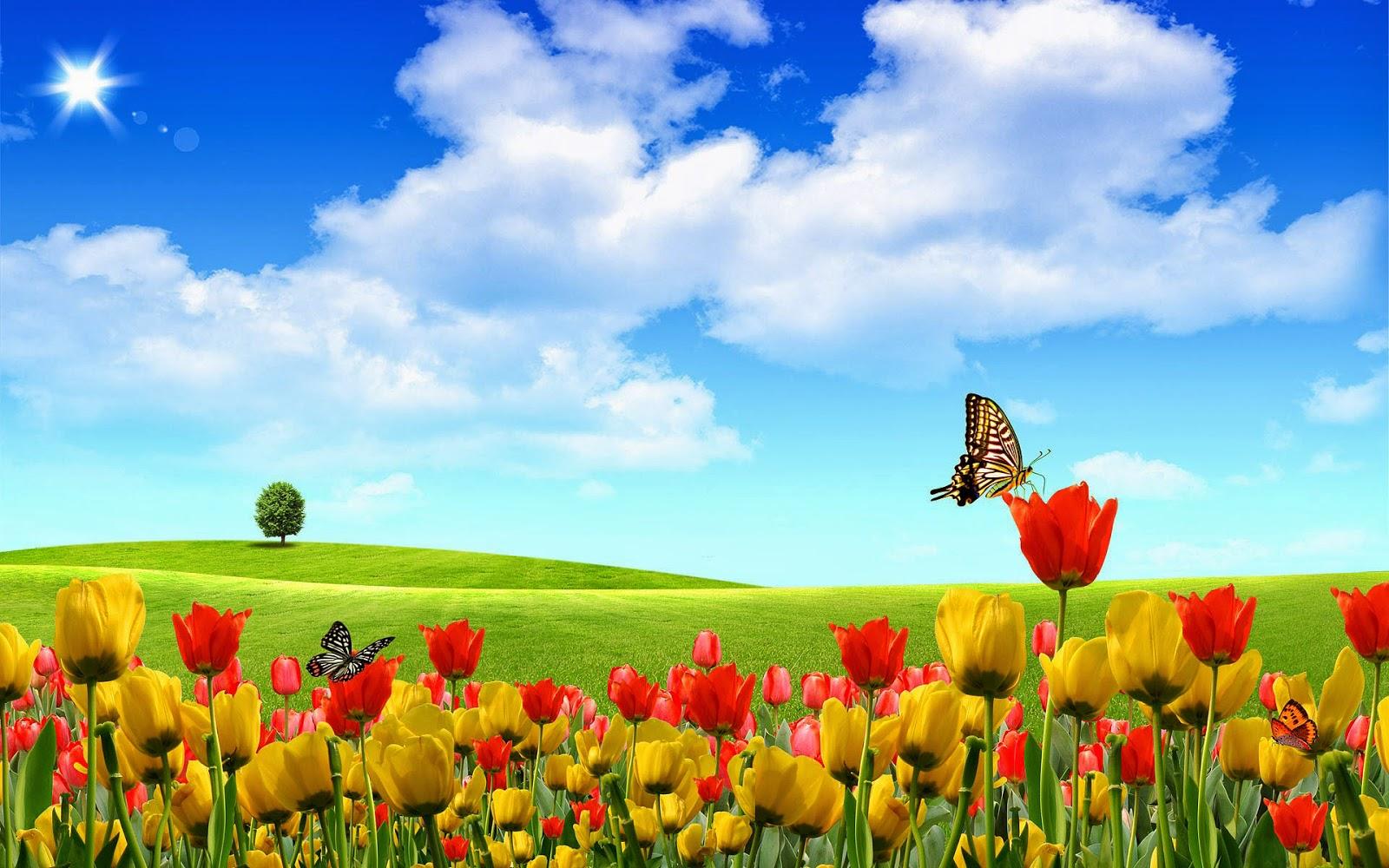 Vlinders en tulpen