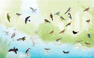 Aneka Suara Burung