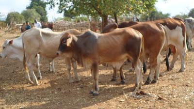 SAM 2143%2B %2BCopy - Ufugaji katika shamba la Rushu Ranchi Kisarawe