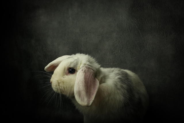 5 Confessions From a Bunny Addict!