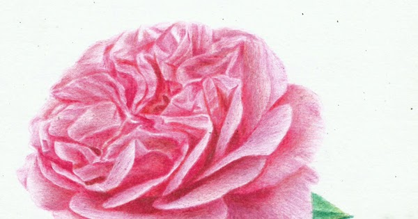 64 Gambar Bunga Yang Diarsir Hd Gambar Pixabay