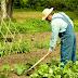 Agricultores Familiares e Pescadores Artesanais vão ter mais facilidade para pedir aposentadoria