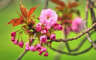 اشيك صور الزهور