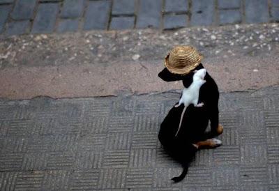 Fotos de animales tiernos.