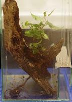 uprawa hydroponiczna w terrarium