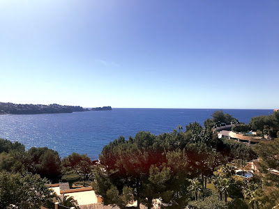 trees and the sea in mallorca