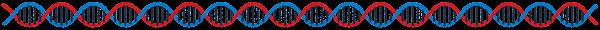 DNAのライン素材(長い)