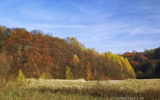 http://fotobabij.blogspot.com/2015/11/roztocze-buczyny.html