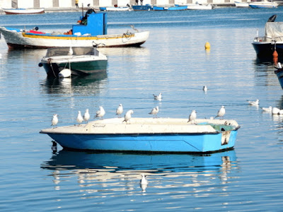 Gabbiani su barca