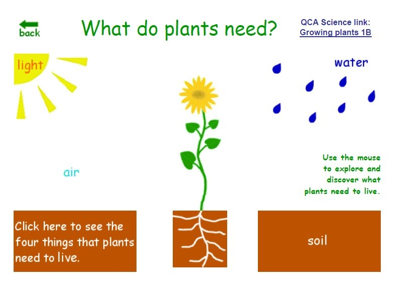 Artero children's blog: UNIT 7: PLANTS NEEDS