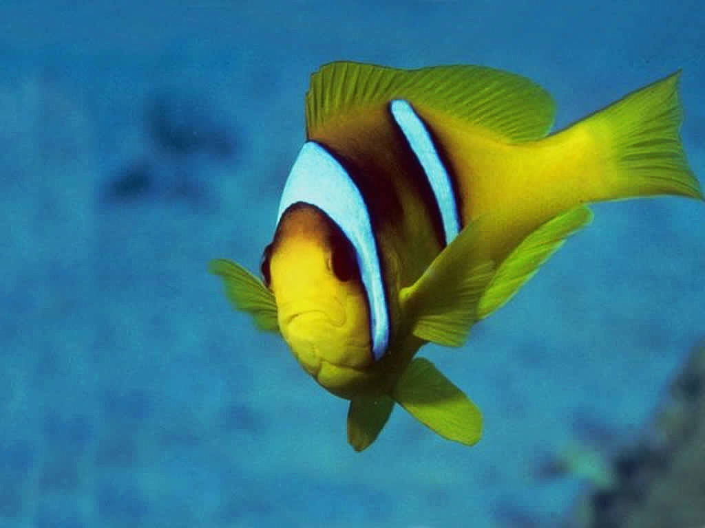 Fish Wallpapers,Fish Pictures,Fish Photos: Tropical Fish ...