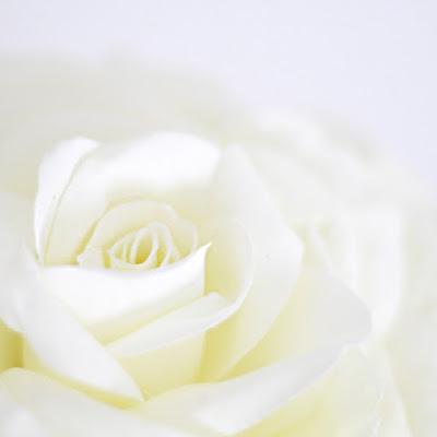 バラのメリアブーケ(白)-ウェディングブーケと花髪飾りairaka