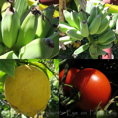 We have bananas, lemons and tomatoes