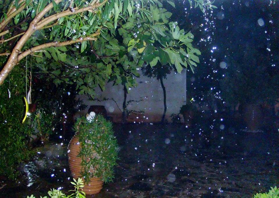 A very wet garden