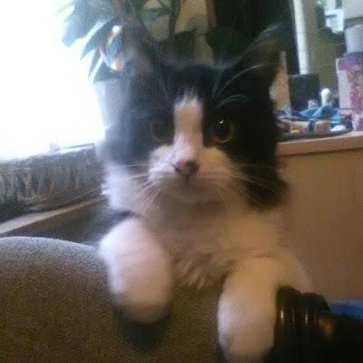 lemmy-chaton-mon-bébé