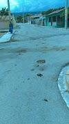 Animales se apoderan de calle 11 de febrero del Distrito Municipal el Cachon