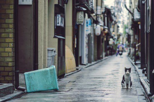 cat in the streets of Kyoto